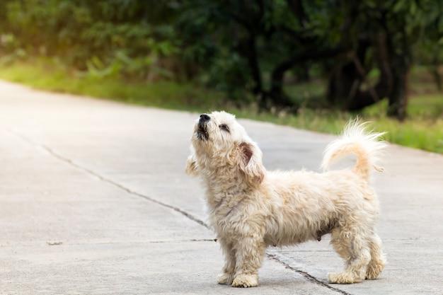 Close up portrait of a stray dog on side walk Premium Photo