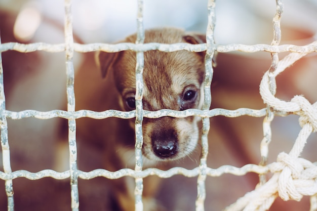 Close up a puppy stray dog, alone life waiting for food. abandoned homeless stray dog is lying in the foundation. little sad abandoned dog in cage. Premium Photo