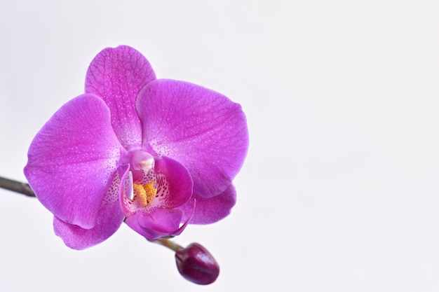 Close-up of purple orchid Free Photo