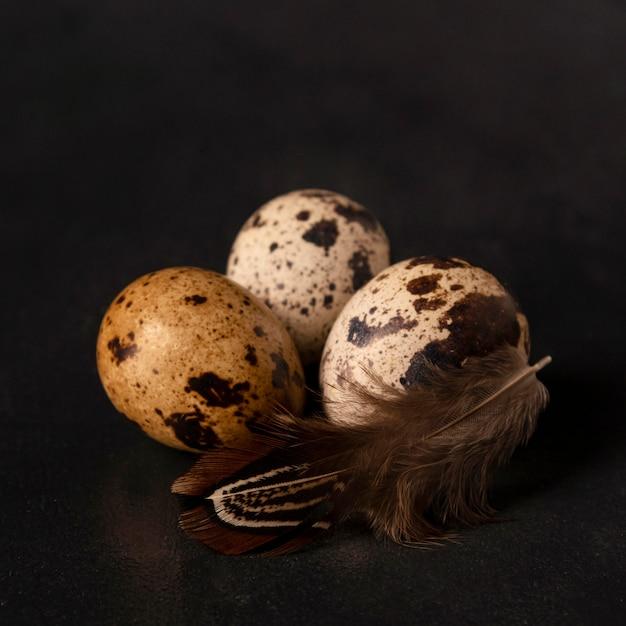 Макро перепелиные яйца с пером Бесплатные Фотографии