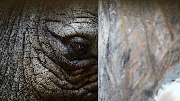 Закройте глаз носорога Premium Фотографии