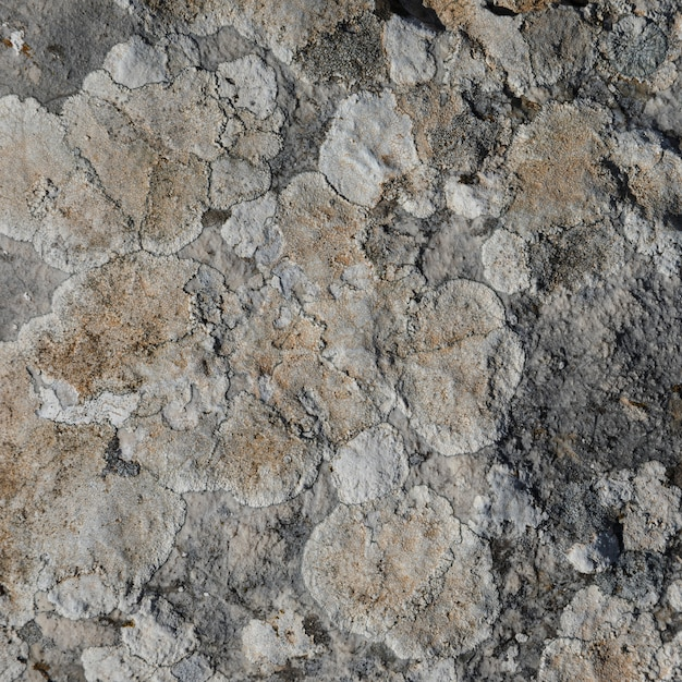 Close-up of rock with lichen Free Photo