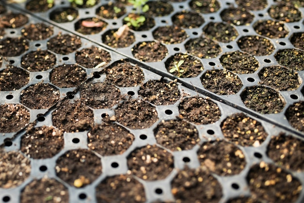 Close-up of seedlings in greenhouse Free Photo