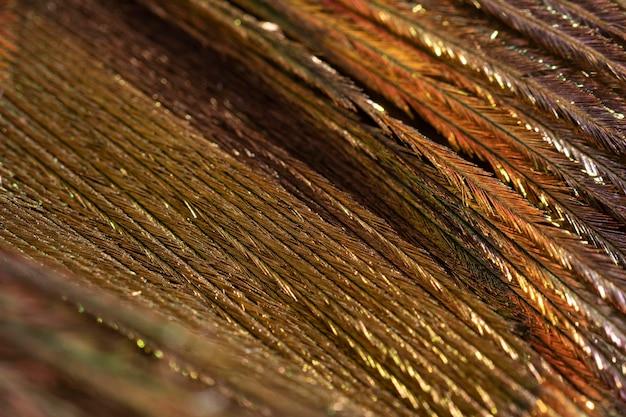 クローズアップ光沢のある羽の有機的な背景 無料写真