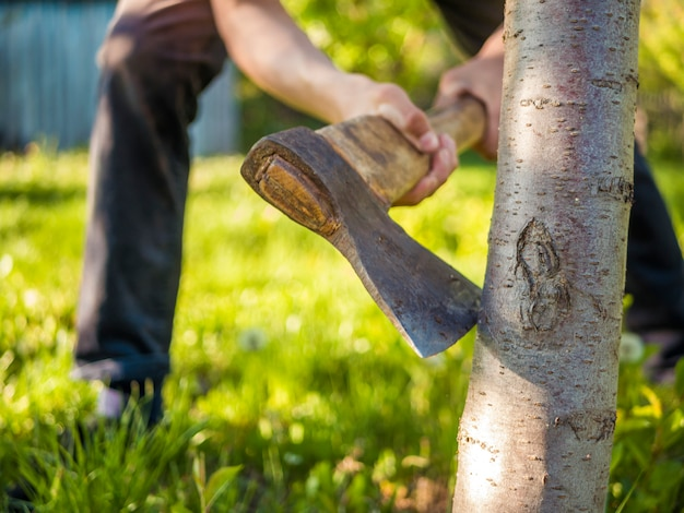 Close up shot of the axe in the hand of man working in the garden Premium Photo