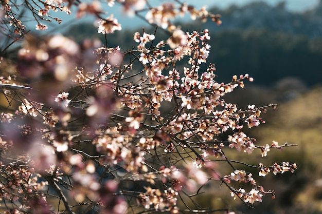 Close up shot blooming branches Free Photo