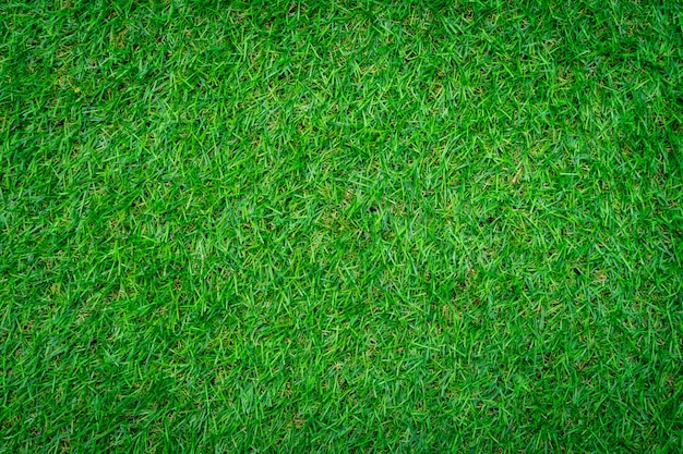 Close-up shot of green grass background. Premium Photo