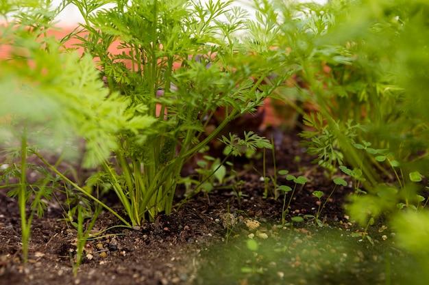 土壌中の野菜のクローズアップショット 無料写真