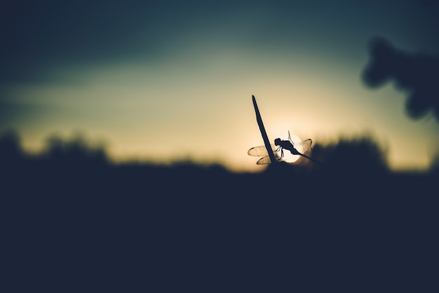 Close up silhouette dragonfly on grass. Premium Photo