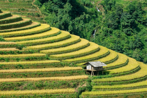 Close up of a small hut in terraced rice field Premium Photo