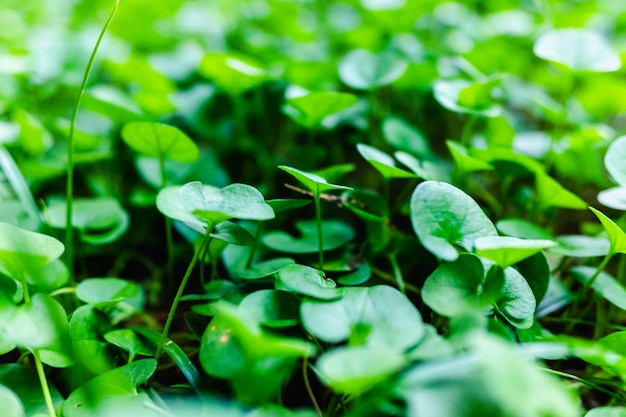 Close-up of the soil of a garden covered with green and fresh seedlings. Premium Photo