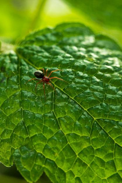 緑の葉のクローズアップクモ 無料写真