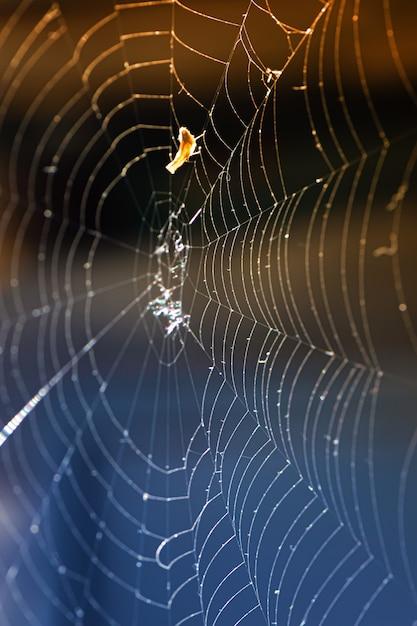 Una stretta di una ragnatela Foto Gratuite
