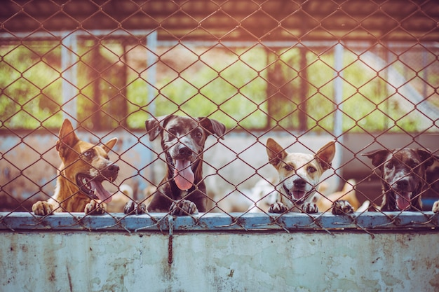 Close up stray dogs. abandoned homeless stray dogs is lying in the foundation. Premium Photo