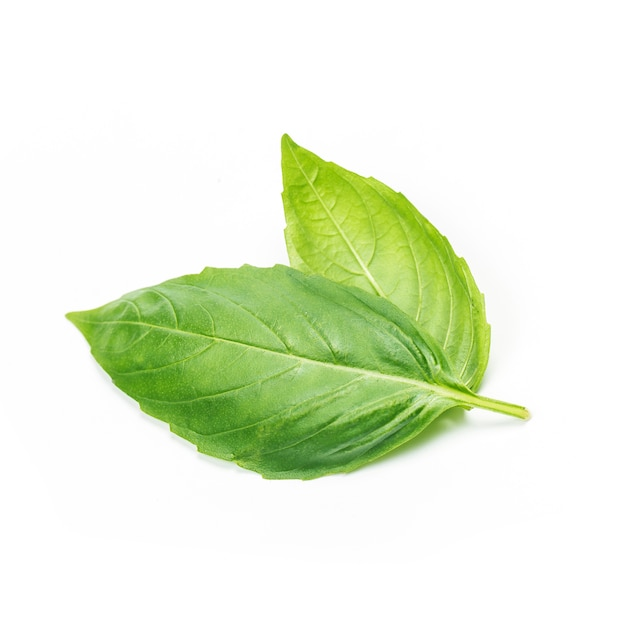 Close up studio shot of fresh green basil herb leaves isolated on white background. sweet genovese basil Free Photo