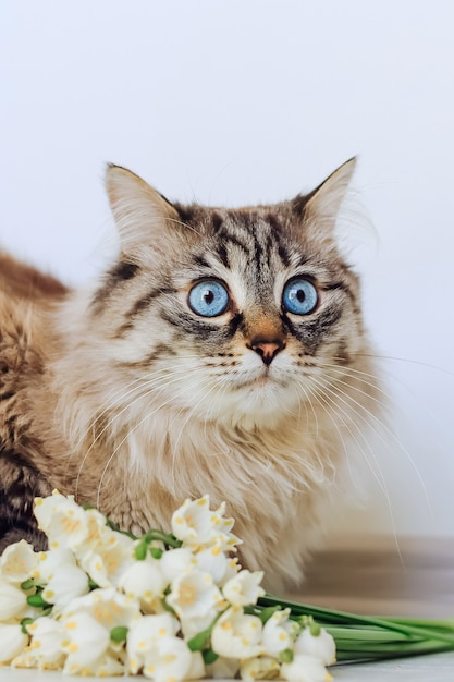 Close-up of a surprised cat sitting near beautiful white snowdrops on the background of a white wall Premium Photo
