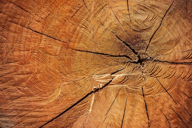 Close up texture of cutting timber by chainsaw. concept campaign of global warming and forest preservation. Premium Photo