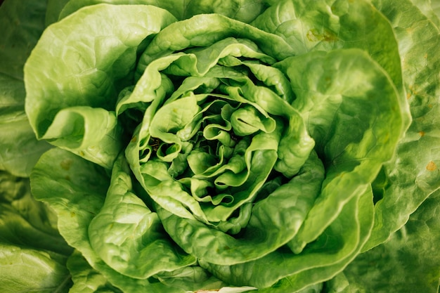 Close-up top view of fresh green salad Free Photo
