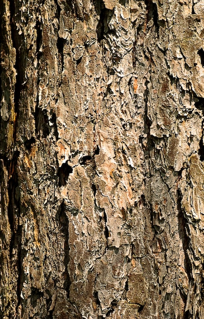 Close up tree bark. natural texture. shallow dof Premium Photo