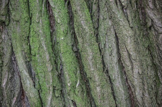 Close up of a tree bark overgrown with green moss Premium Photo