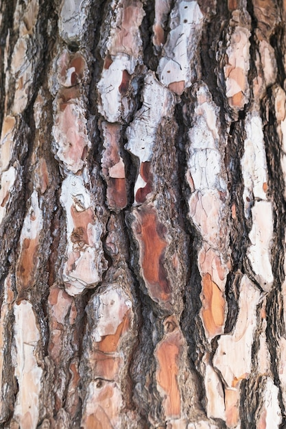 Close-up tree bark texture Free Photo