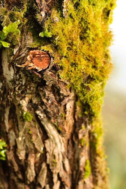 Close up tree bark with moss. shallow dof Premium Photo