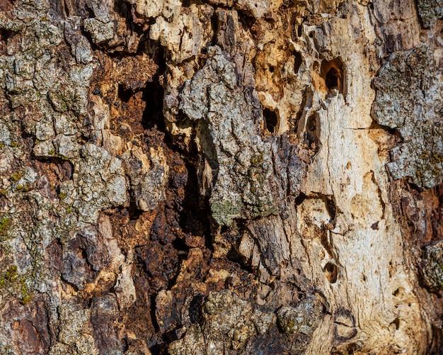 Close up tree texture Free Photo