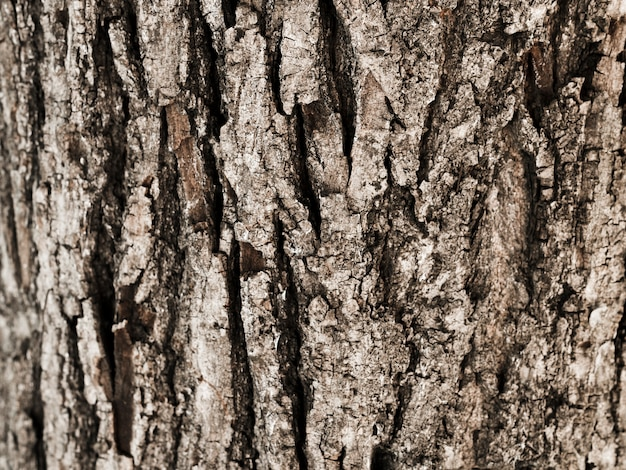 Close-up of tree trunk textured Free Photo