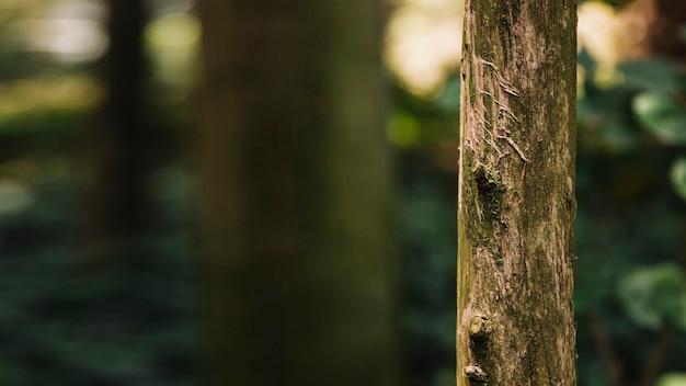 Close-up of tree trunk Premium Photo