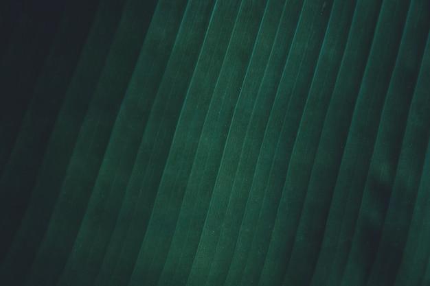 Close up tropical banana leaves texture background. Premium Photo