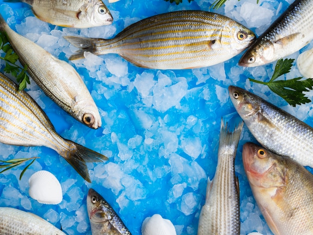 Close-up variety of fresh fishes on ice Free Photo