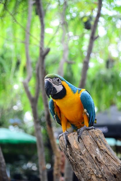 Close up view of colorful amazon macaw bird Premium Photo