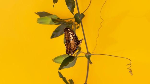 Крупным планом вид красивой бабочки концепции Бесплатные Фотографии