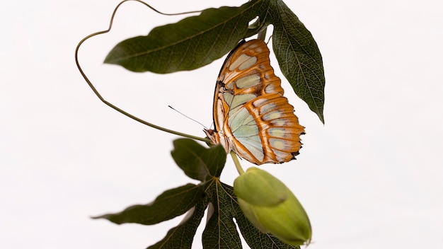 Крупным планом вид красивой бабочки концепции Premium Фотографии