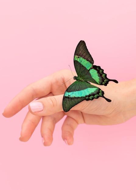 Крупным планом вид красивой бабочки под рукой Бесплатные Фотографии