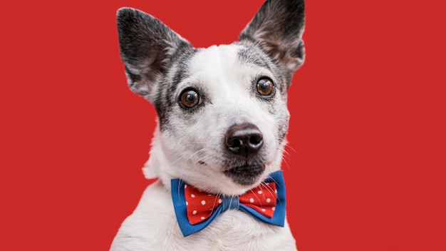 Крупным планом вид красивой собаки с бабочкой Бесплатные Фотографии