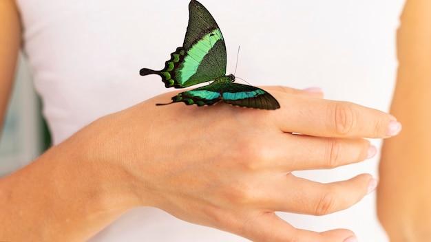 Крупным планом вид бабочки под рукой Бесплатные Фотографии