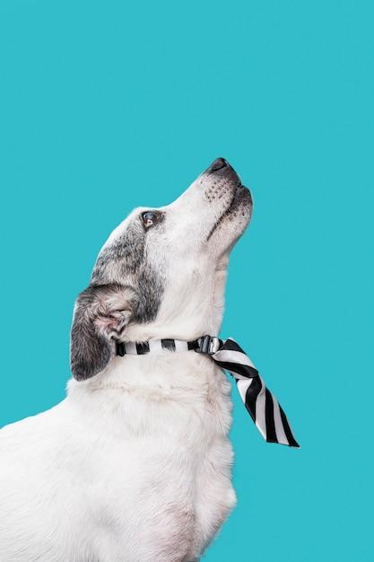 Крупным планом вид милой собаки концепции Бесплатные Фотографии