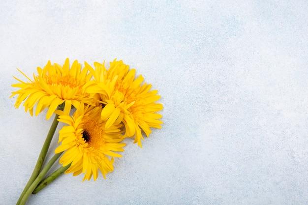 左側と白い表面の花のクローズアップ表示 無料写真