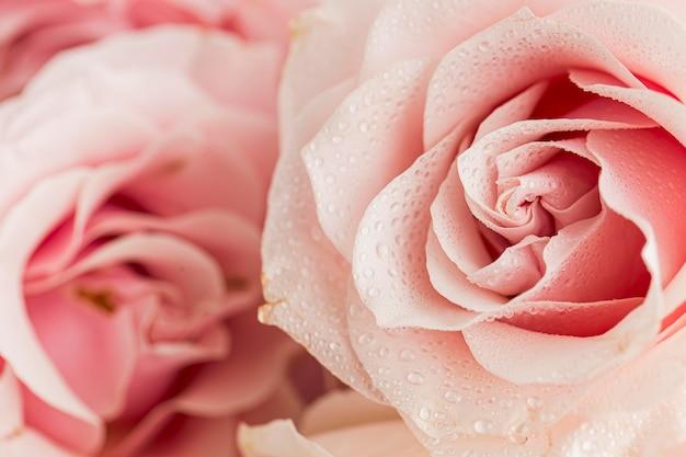 Крупным планом вид валентинки; концепция дня с розами Бесплатные Фотографии