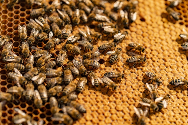 Close up view of the working bees on honey cells Premium Photo