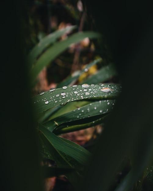 Close-up di gocce d'acqua sulle foglie di una pianta Foto Gratuite