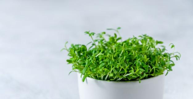 Закрыть кресс-салат microgreens Premium Фотографии