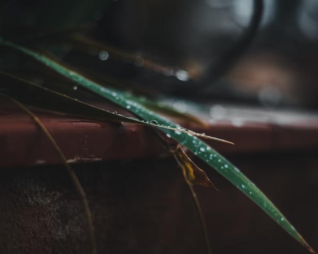 Close-up di waterdrops in congedo di una pianta Foto Gratuite