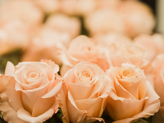 Close up of wedding rose bouquet Free Photo