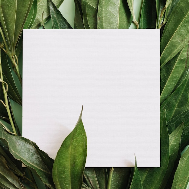 Close-up of white blank paper over the green leaves twigs Free Photo