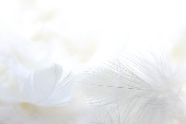 Close up white feather background | Premium PhotoFeather Background Twitter