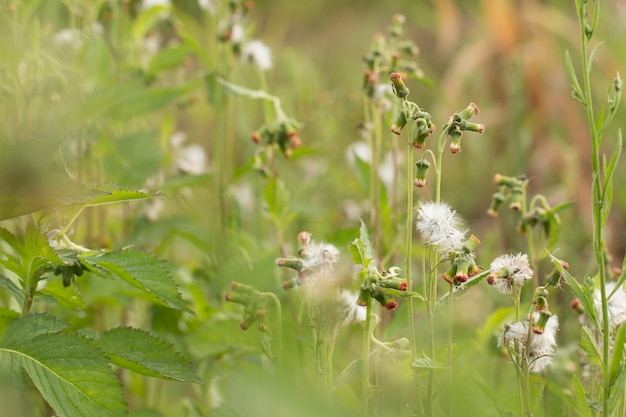 Close up of white meadow flowers in field or grass flower Premium Photo