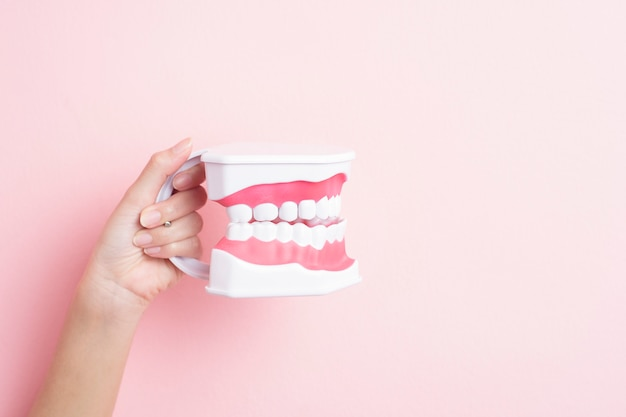Close up of woman hand is holding artificial model teeth for demonstration dental clean Premium Photo