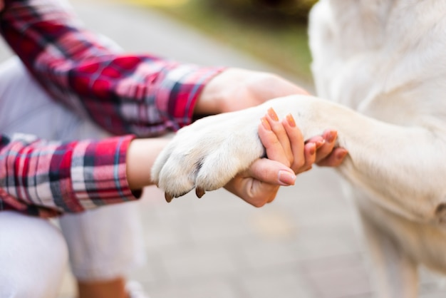 Close-up woman holding dogs paw Free Photo